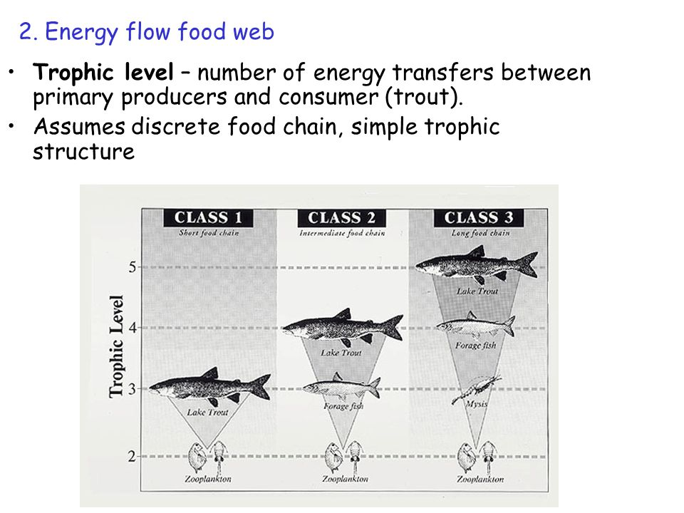 Energy flow Trophic level concept useful for predicting contaminant levels Bioaccumulation: the accumulation of substances that are not excreted and are subsequently passed from prey to predator 3 4 5 Estimated # of trophic levels