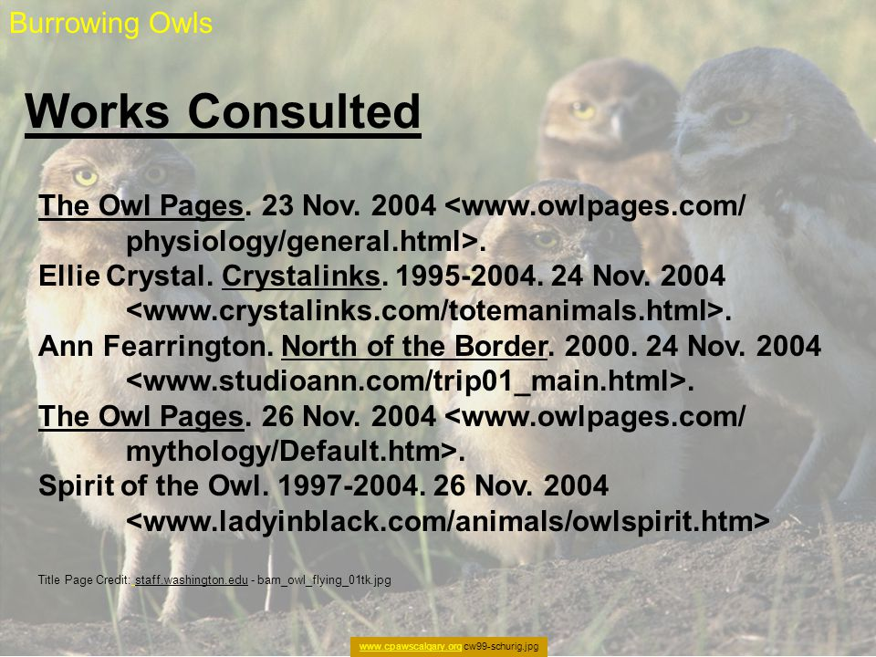 Works Consulted Burrowing Owls www.cpawscalgary.orgwww.cpawscalgary.org cw99-schurig.jpg The Owl Pages. 23 Nov. 2004 <www.owlpages.com/ physiology/gen
