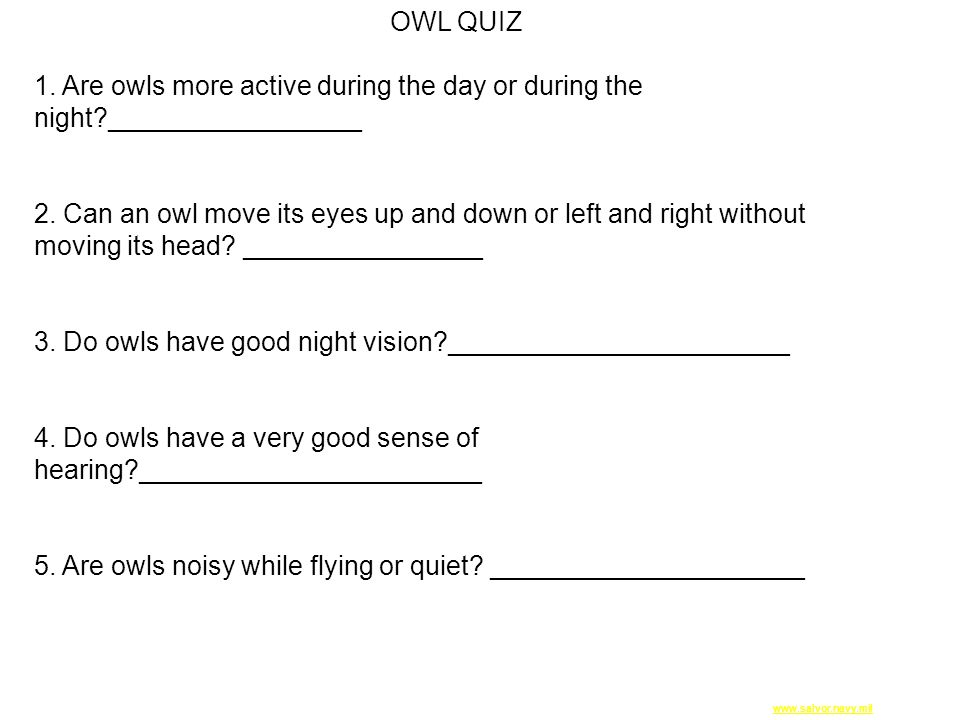 www.salvor.navy.milwww.salvor.navy.mil PugetSound.jpg OWL QUIZ 1. Are owls more active during the day or during the night?_________________ 2. Can an