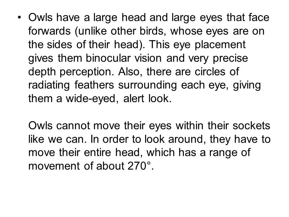 Spectacled Owl staff.washington.edustaff.washington.edu spectacled_owl_03tk-.jpg