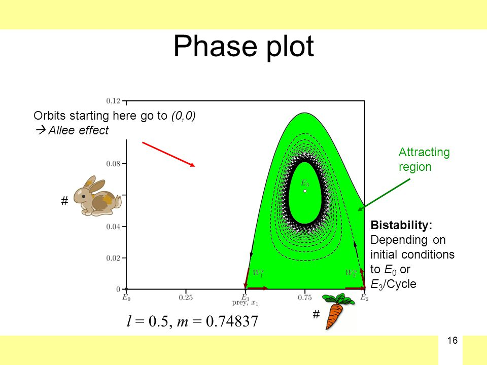 16 Phase plot l = 0.5, m = 0.74837 Attracting region Orbits starting here go to (0,0)  Allee effect Bistability: Depending on initial conditions to E 0 or E 3 /Cycle # #