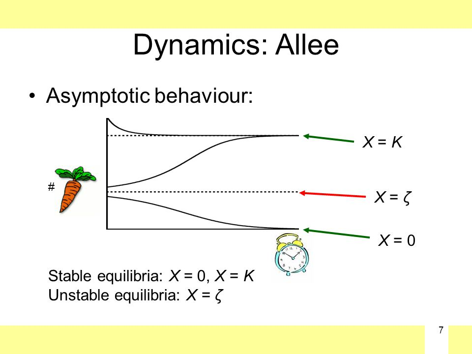7 Dynamics: Allee Asymptotic behaviour: Stable equilibria: X = 0, X = K Unstable equilibria: X = ζ X = K X = ζ X = 0 #
