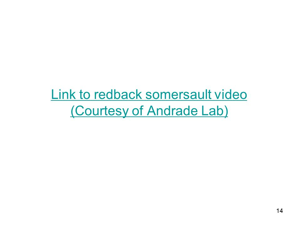 14 Link to redback somersault video (Courtesy of Andrade Lab) 14