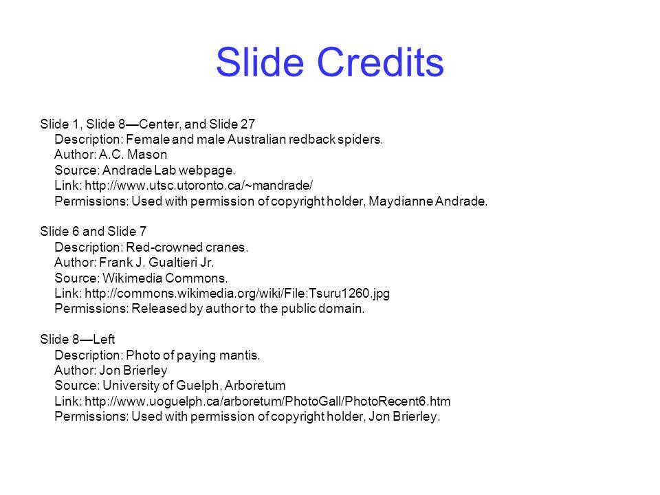 Slide Credits Slide 1, Slide 8—Center, and Slide 27 Description: Female and male Australian redback spiders. Author: A.C. Mason Source: Andrade Lab we