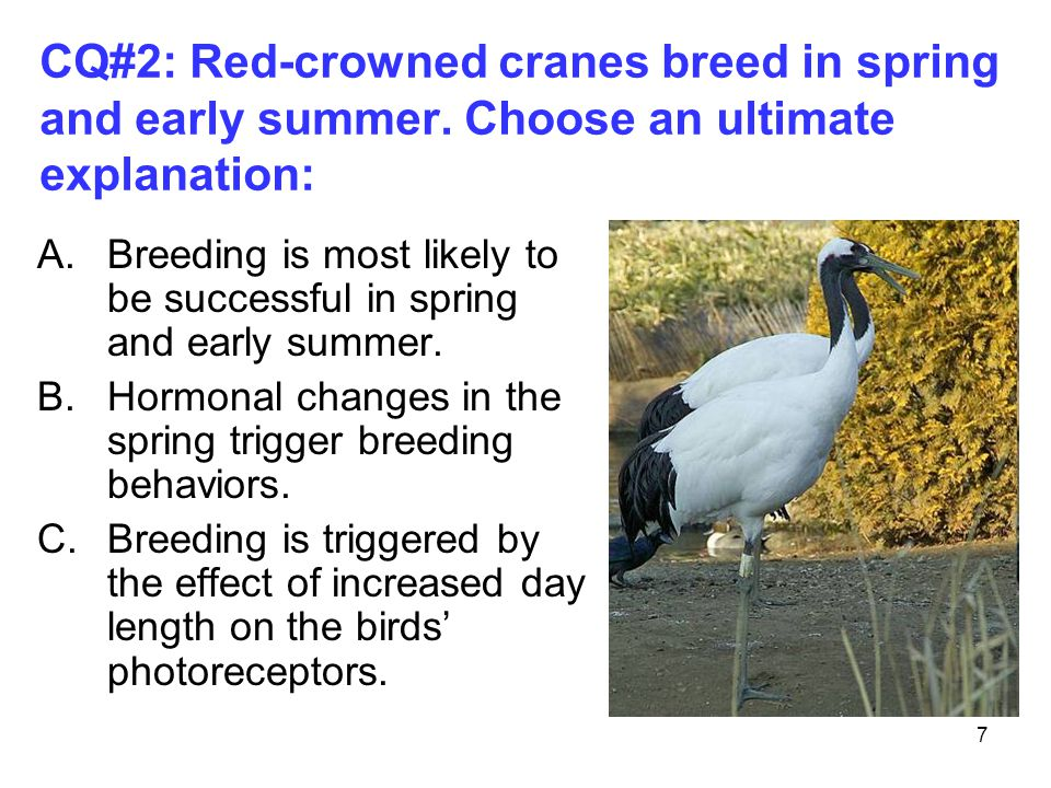 7 A.Breeding is most likely to be successful in spring and early summer.