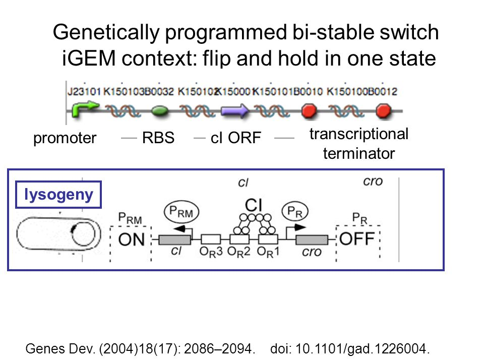 Genetically programmed bi-stable switch iGEM context: flip and hold in one state Genes Dev.