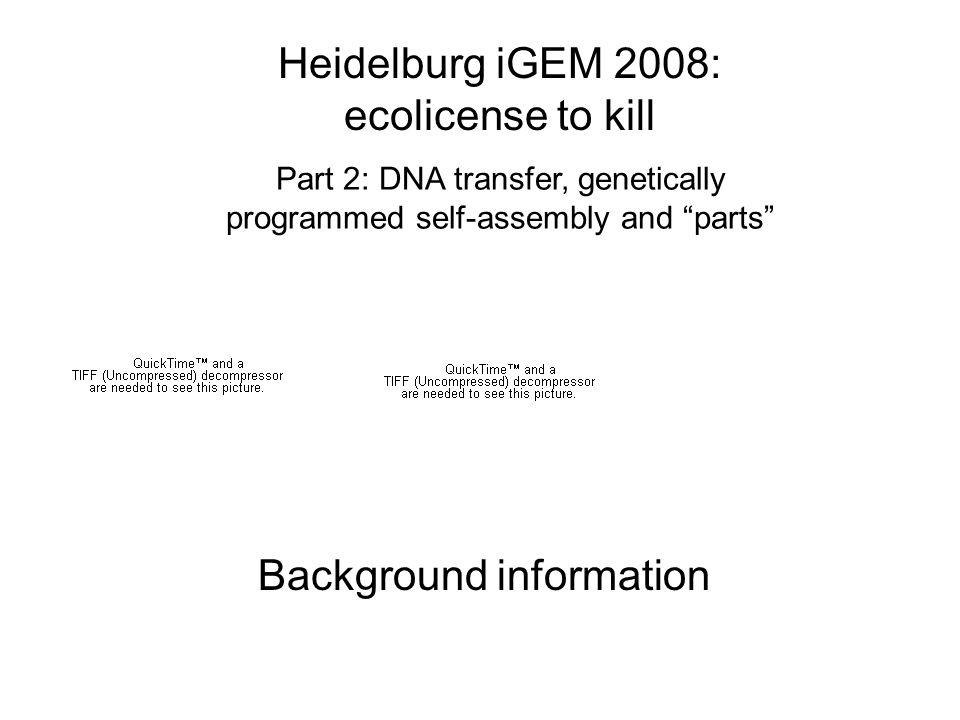 DNA transfer natural context: 3 mechanisms http://www.scq.ubc.ca/wp-content/uploads/2006/08/HorizontalTransfer.gif