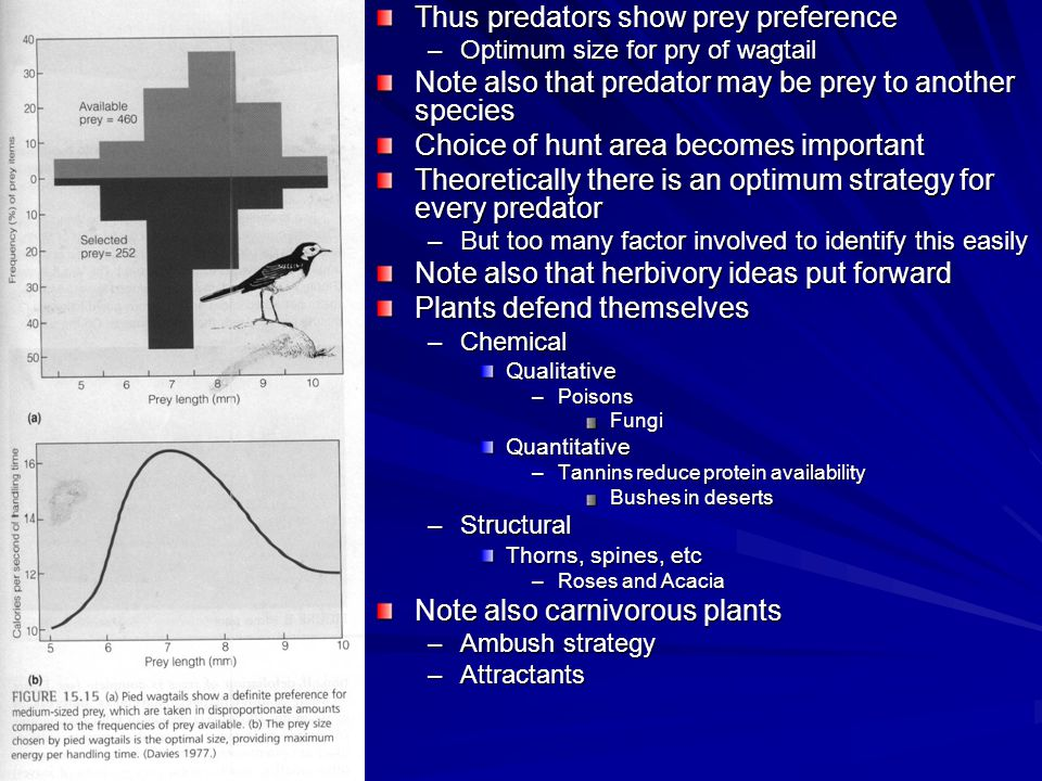 Thus predators show prey preference –Optimum size for pry of wagtail Note also that predator may be prey to another species Choice of hunt area becomes important Theoretically there is an optimum strategy for every predator –But too many factor involved to identify this easily Note also that herbivory ideas put forward Plants defend themselves –Chemical Qualitative –Poisons FungiQuantitative –Tannins reduce protein availability Bushes in deserts –Structural Thorns, spines, etc –Roses and Acacia Note also carnivorous plants –Ambush strategy –Attractants