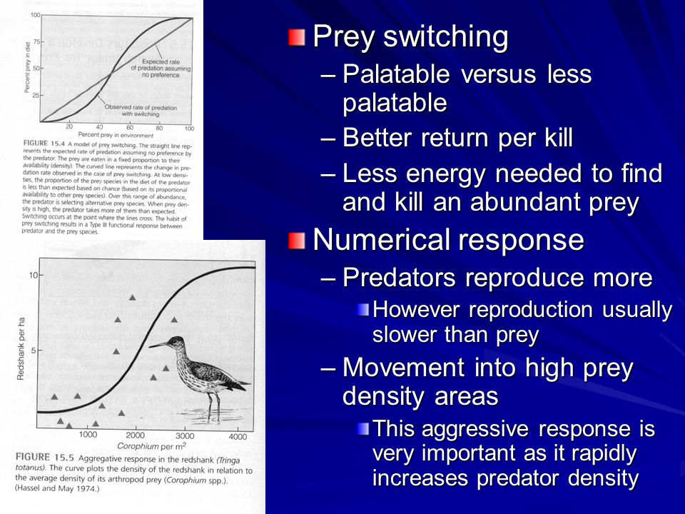Prey switching –Palatable versus less palatable –Better return per kill –Less energy needed to find and kill an abundant prey Numerical response –Predators reproduce more However reproduction usually slower than prey –Movement into high prey density areas This aggressive response is very important as it rapidly increases predator density