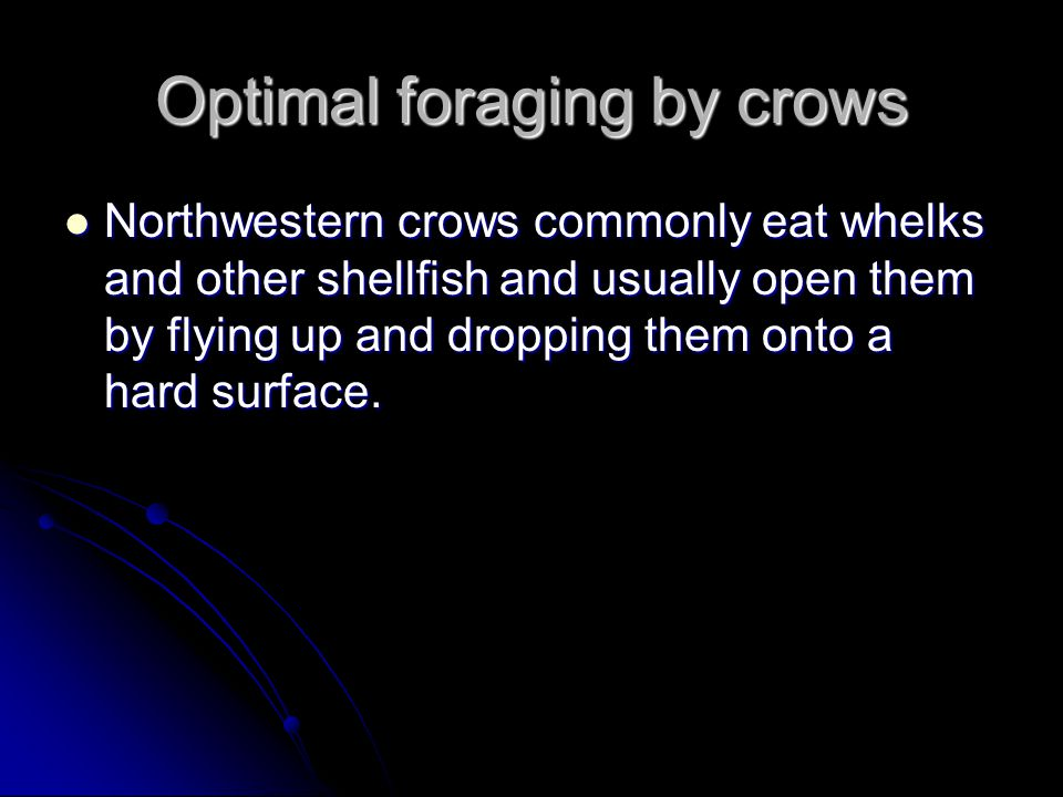 Optimal foraging by crows Northwestern crows commonly eat whelks and other shellfish and usually open them by flying up and dropping them onto a hard