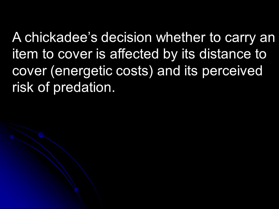 A chickadee's decision whether to carry an item to cover is affected by its distance to cover (energetic costs) and its perceived risk of predation.
