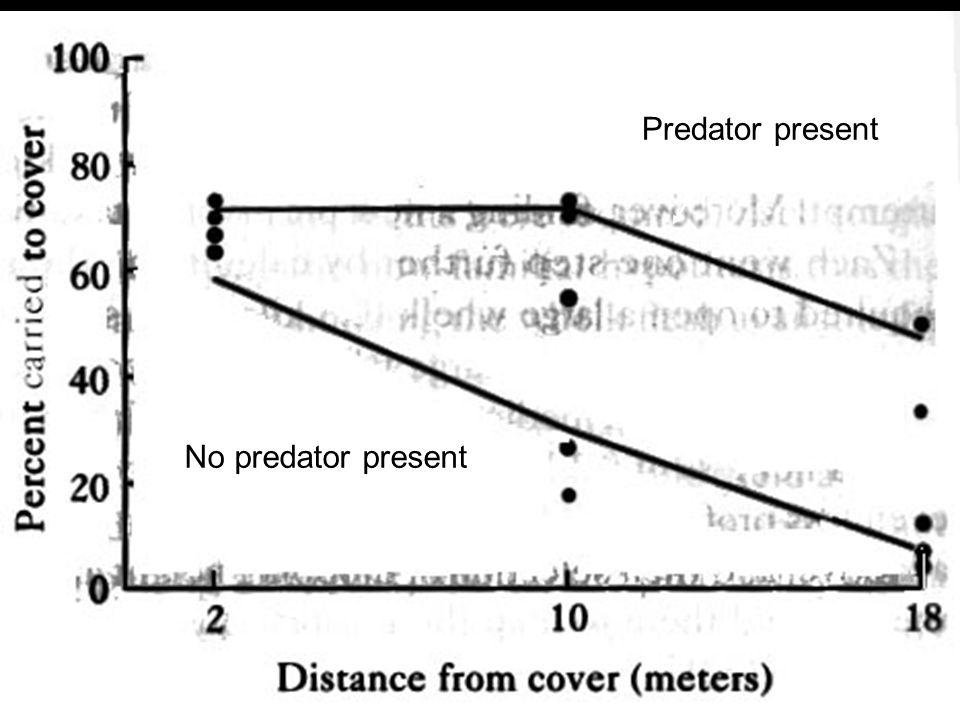 Predator present No predator present