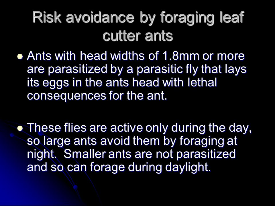 Risk avoidance by foraging leaf cutter ants Ants with head widths of 1.8mm or more are parasitized by a parasitic fly that lays its eggs in the ants head with lethal consequences for the ant.