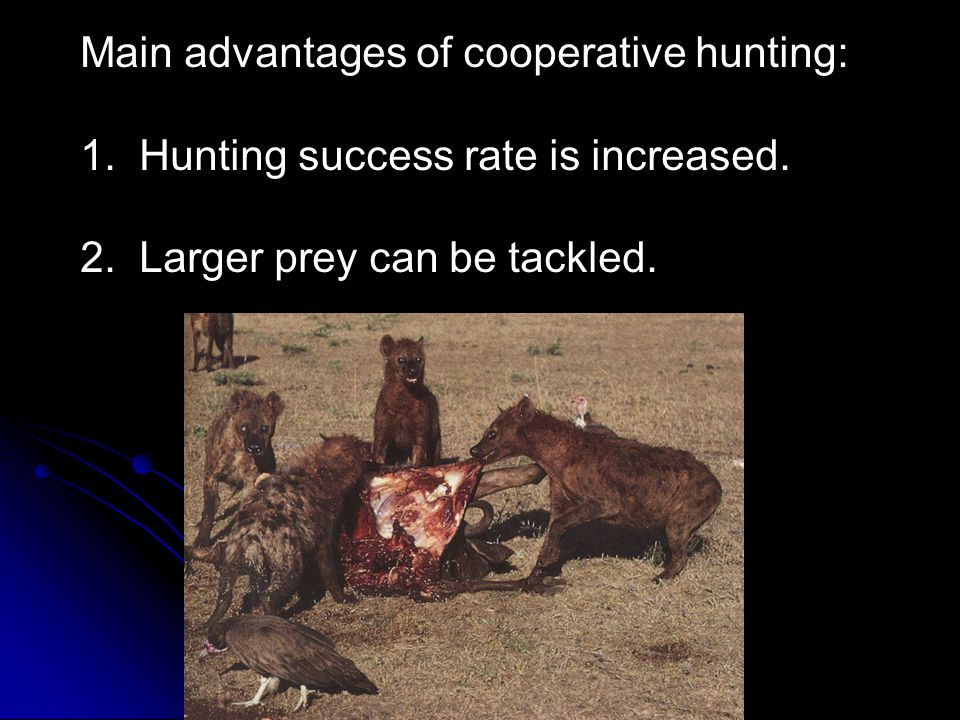 Main advantages of cooperative hunting: 1. Hunting success rate is increased. 2. Larger prey can be tackled.