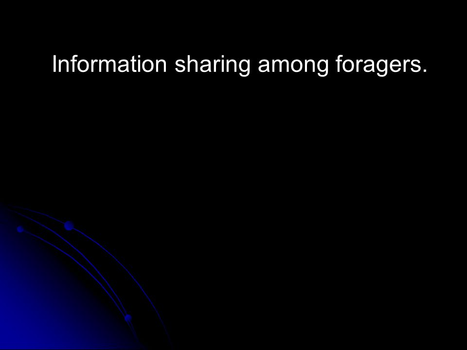 Information sharing among foragers.