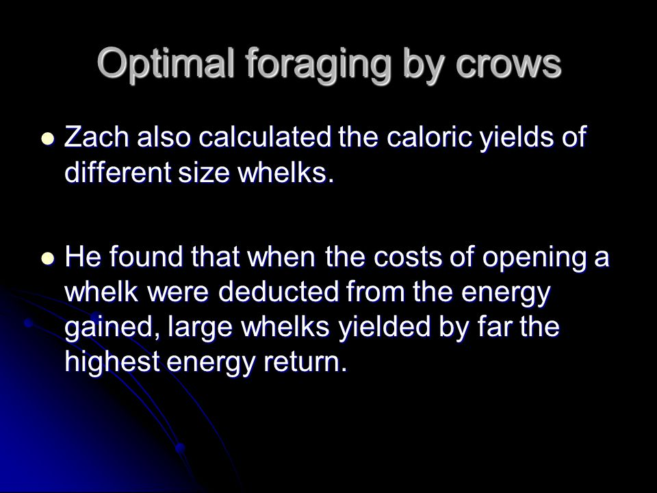 Optimal foraging by crows Zach also calculated the caloric yields of different size whelks. Zach also calculated the caloric yields of different size
