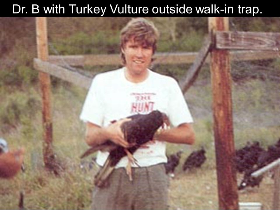 Dr. B with Turkey Vulture outside walk-in trap.