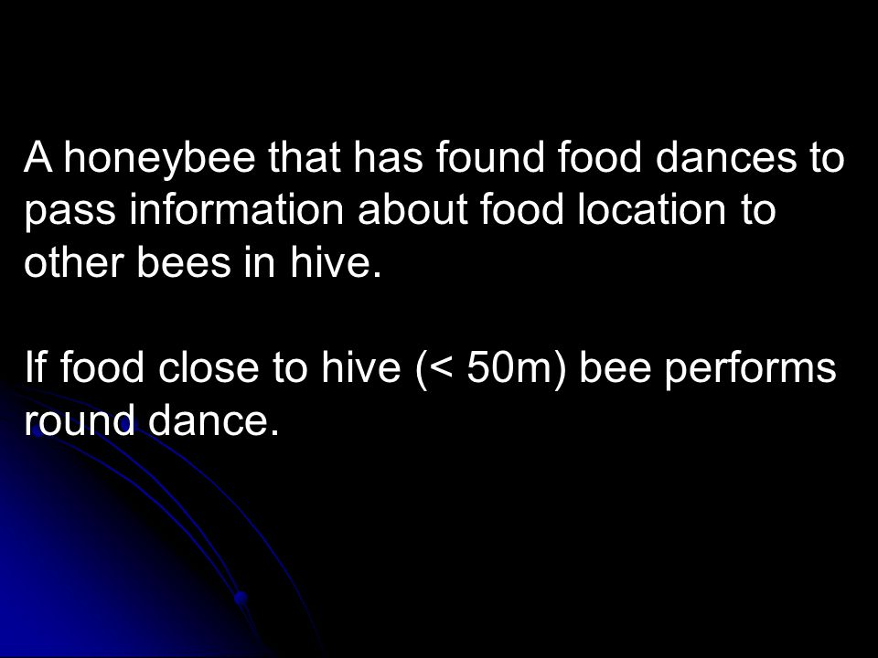 A honeybee that has found food dances to pass information about food location to other bees in hive. If food close to hive (< 50m) bee performs round