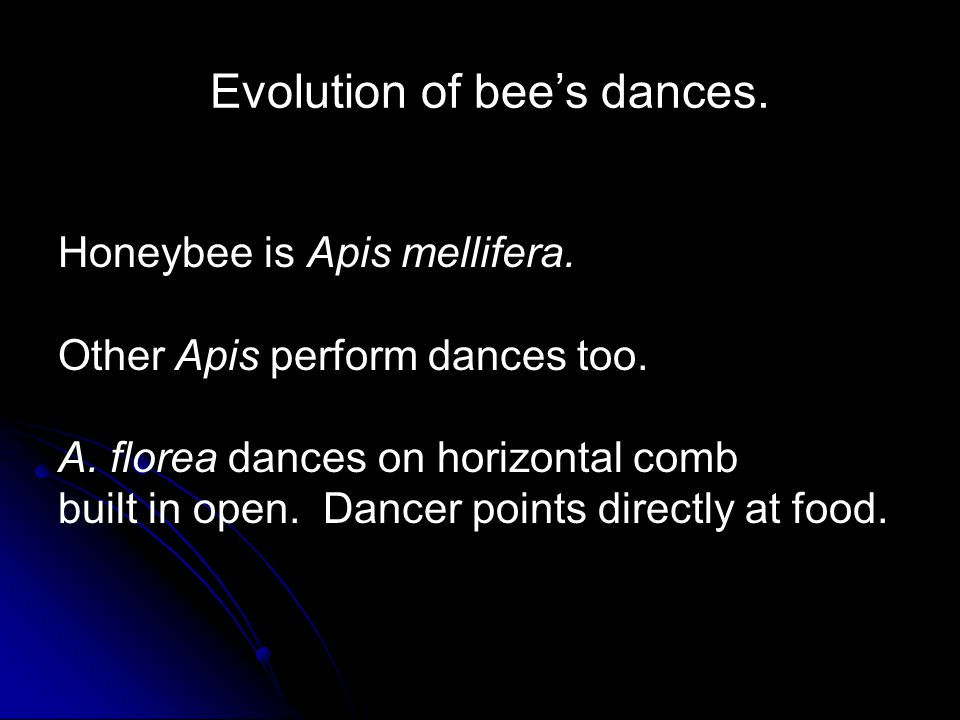 Evolution of bee's dances. Honeybee is Apis mellifera.