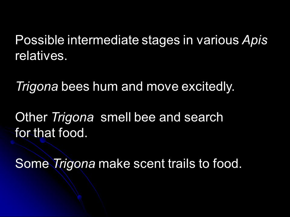 Possible intermediate stages in various Apis relatives. Trigona bees hum and move excitedly. Other Trigona smell bee and search for that food. Some Tr