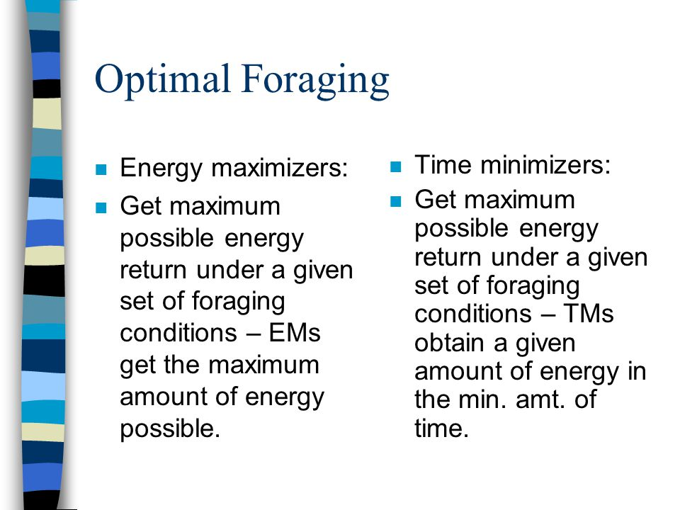 Optimal Foraging n Energy maximizers: n Get maximum possible energy return under a given set of foraging conditions – EMs get the maximum amount of en