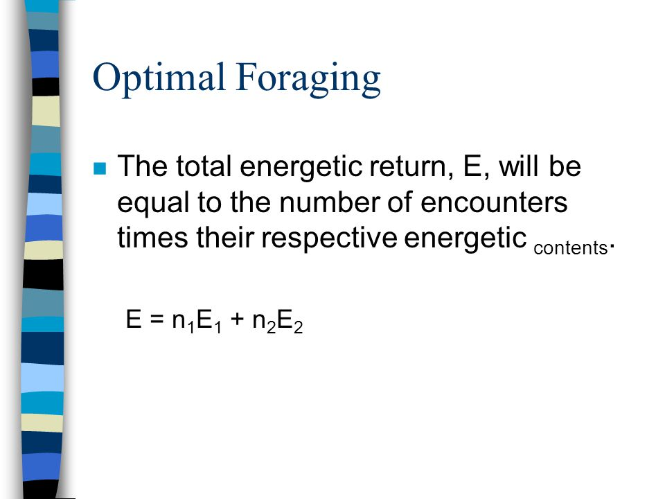 Optimal Foraging n The total energetic return, E, will be equal to the number of encounters times their respective energetic contents. E = n 1 E 1 + n