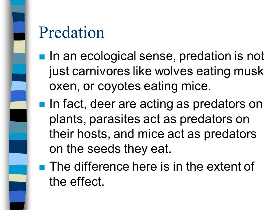 Predation n In an ecological sense, predation is not just carnivores like wolves eating musk oxen, or coyotes eating mice. n In fact, deer are acting