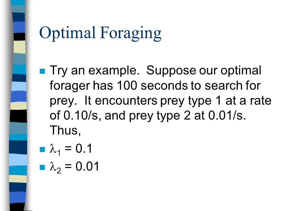 Optimal Foraging n Try an example. Suppose our optimal forager has 100 seconds to search for prey. It encounters prey type 1 at a rate of 0.10/s, and