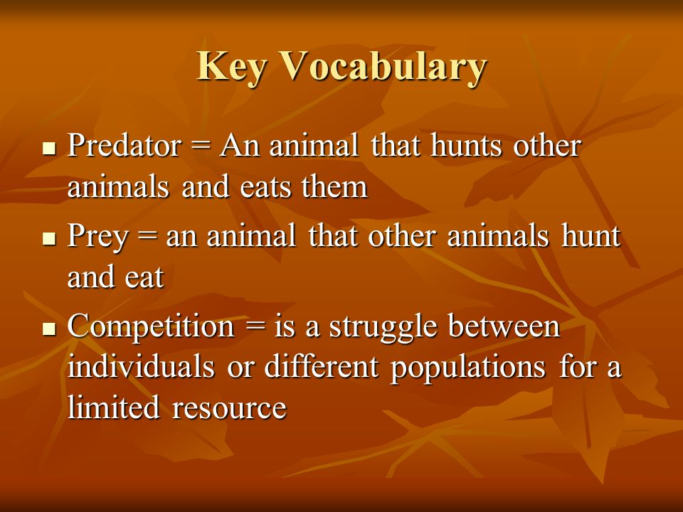 Key Vocabulary Predator = An animal that hunts other animals and eats them Predator = An animal that hunts other animals and eats them Prey = an animal that other animals hunt and eat Prey = an animal that other animals hunt and eat Competition = is a struggle between individuals or different populations for a limited resource Competition = is a struggle between individuals or different populations for a limited resource