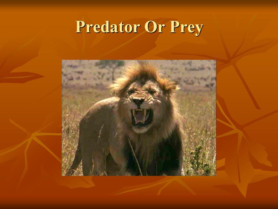 Predator Or Prey