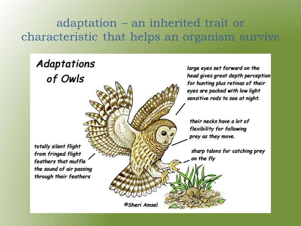 adaptation – an inherited trait or characteristic that helps an organism survive