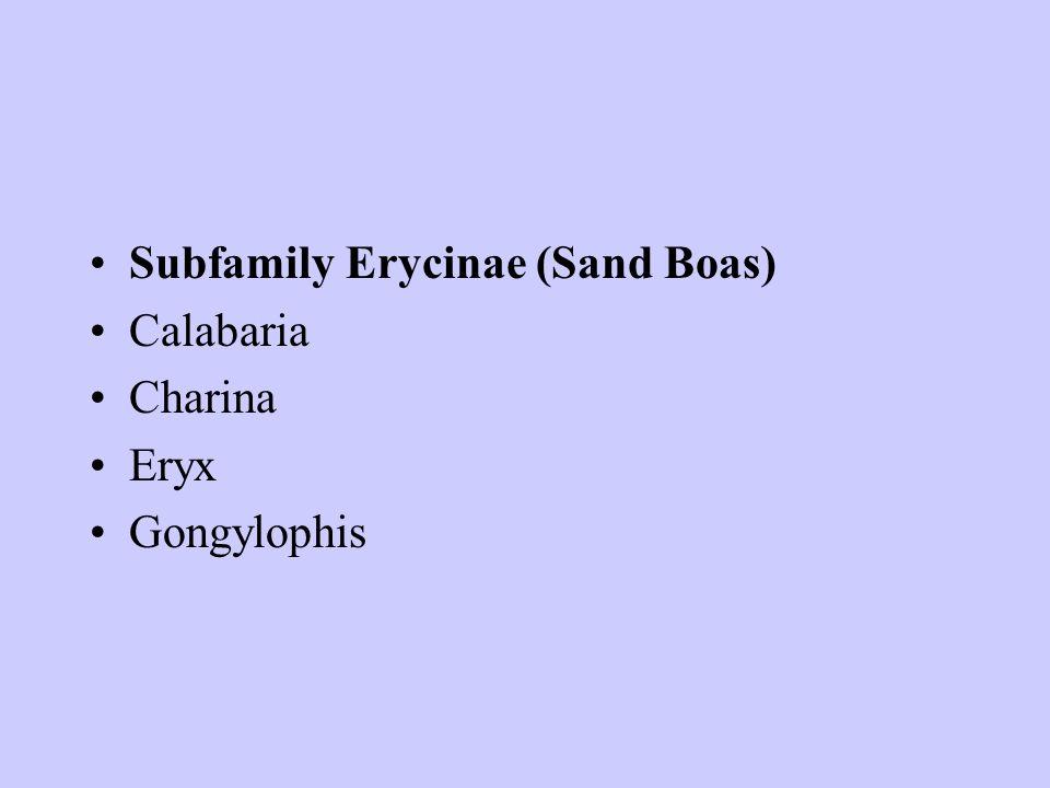 Subfamily Erycinae (Sand Boas) Calabaria Charina Eryx Gongylophis