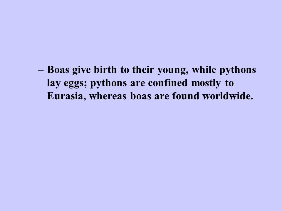 –Boas give birth to their young, while pythons lay eggs; pythons are confined mostly to Eurasia, whereas boas are found worldwide.