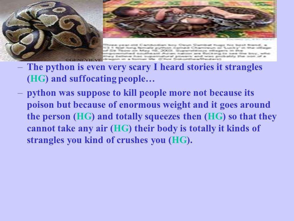–The python is even very scary I heard stories it strangles (HG) and suffocating people… –python was suppose to kill people more not because its poison but because of enormous weight and it goes around the person (HG) and totally squeezes then (HG) so that they cannot take any air (HG) their body is totally it kinds of strangles you kind of crushes you (HG).