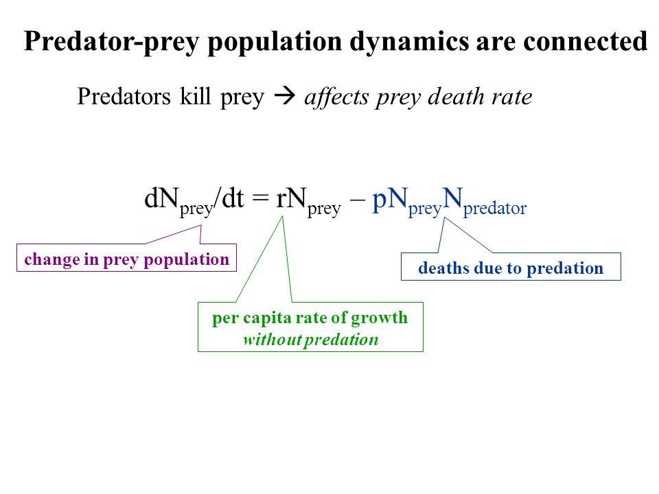 Predator-prey population dynamics are connected Predators kill prey  affects prey death rate dN prey /dt = rN prey change in prey population per capita rate of growth without predation deaths due to predation – pN prey N predator