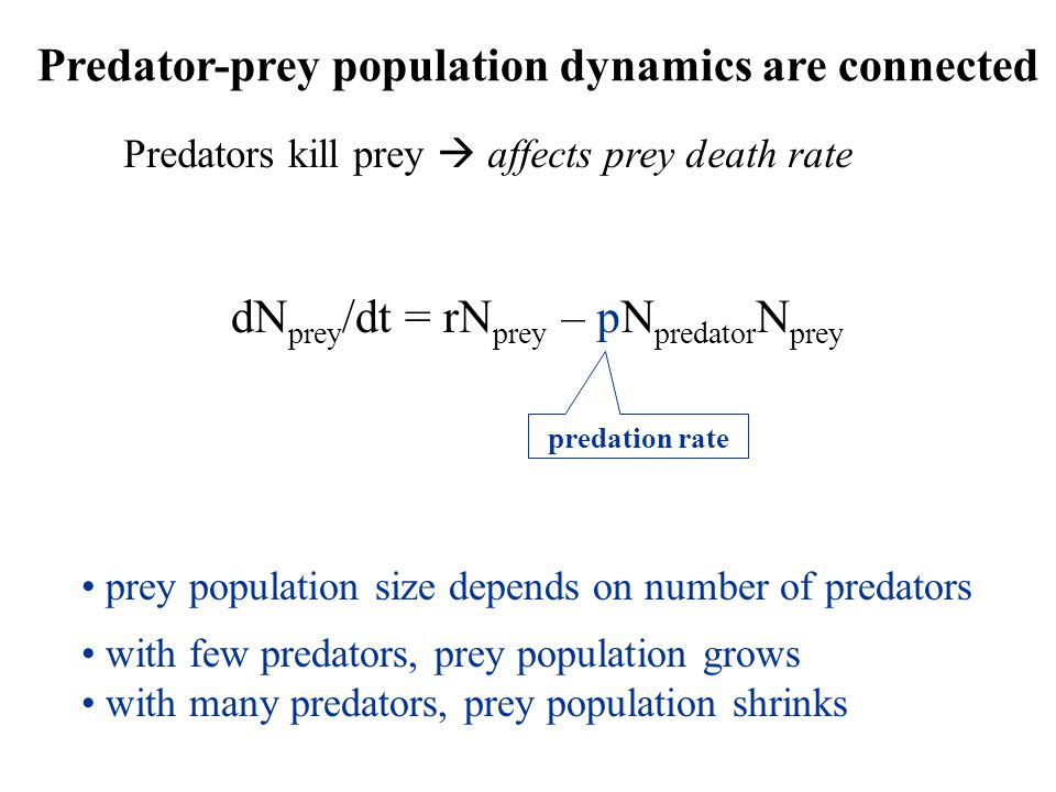 Predator-prey population dynamics are connected Predators kill prey  affects prey death rate dN prey /dt = rN prey – pN predator N prey predation rate prey population size depends on number of predators with few predators, prey population grows with many predators, prey population shrinks