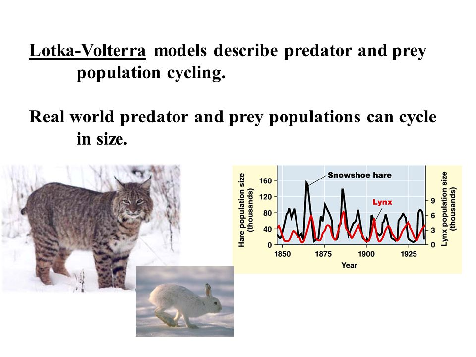 Lotka-Volterra models describe predator and prey population cycling.