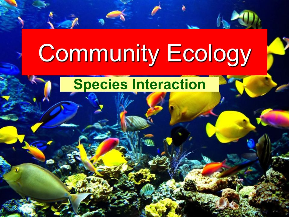 Just as populations contain interacting members of a single species, communities contain interacting populations of many species. – Holt Modern Biology – Ch 20