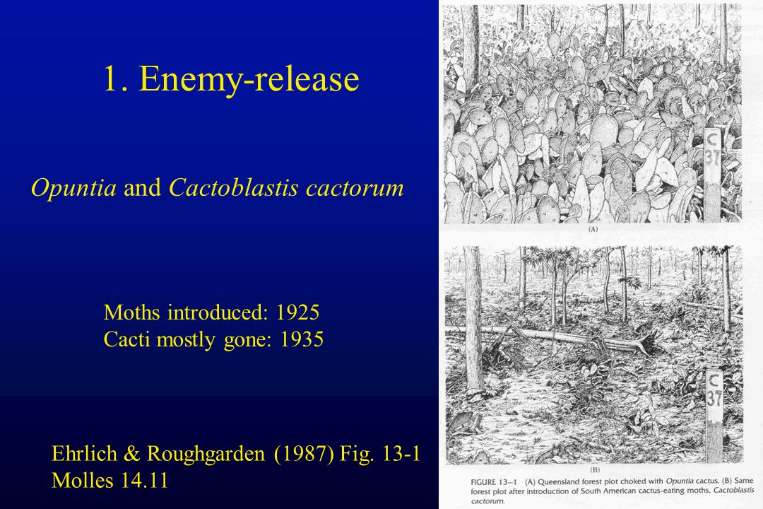 1. Enemy-release Opuntia and Cactoblastis cactorum Ehrlich & Roughgarden (1987) Fig.