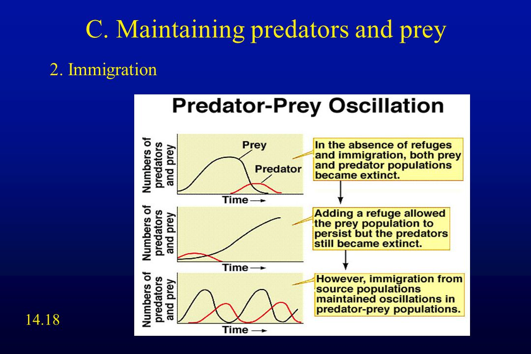 C. Maintaining predators and prey 2. Immigration 14.18