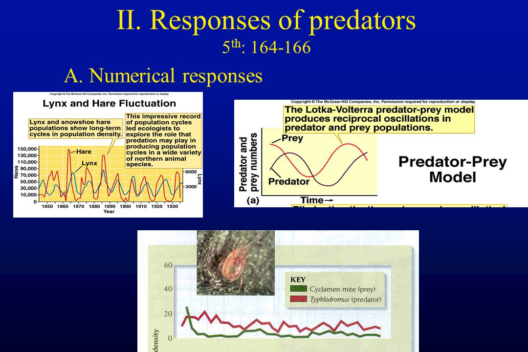II. Responses of predators 5 th : 164-166 A. Numerical responses