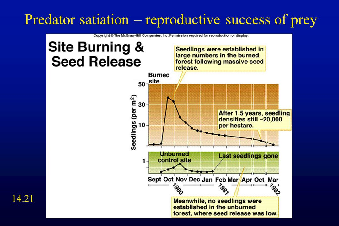 14.21 Predator satiation – reproductive success of prey