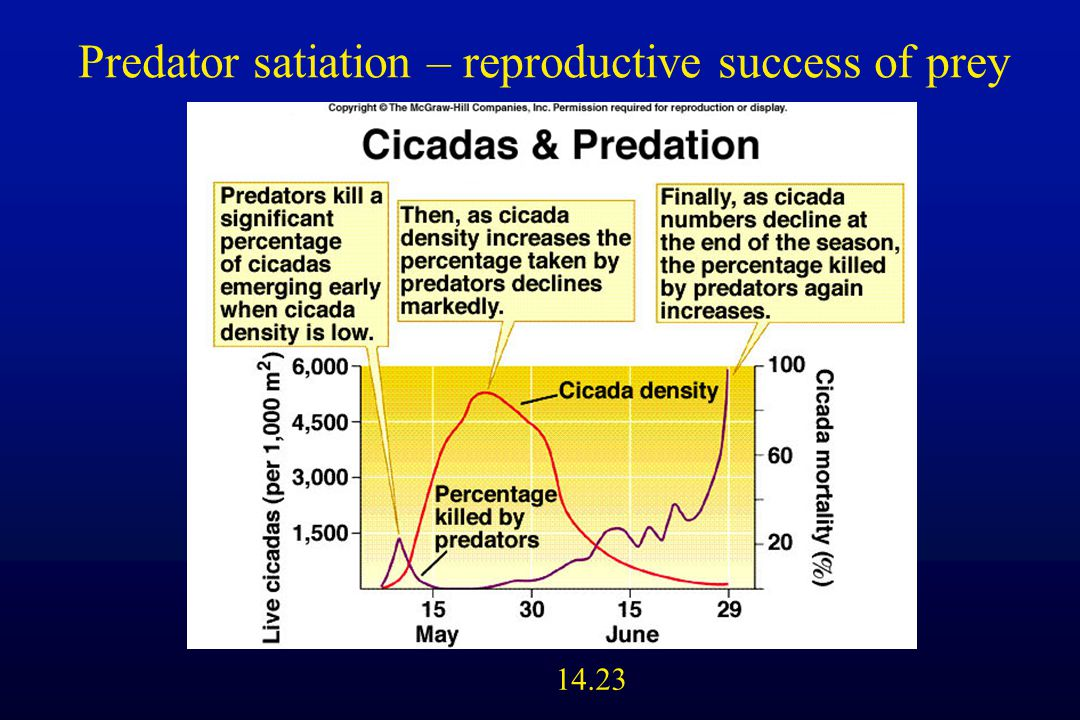 14.23 Predator satiation – reproductive success of prey