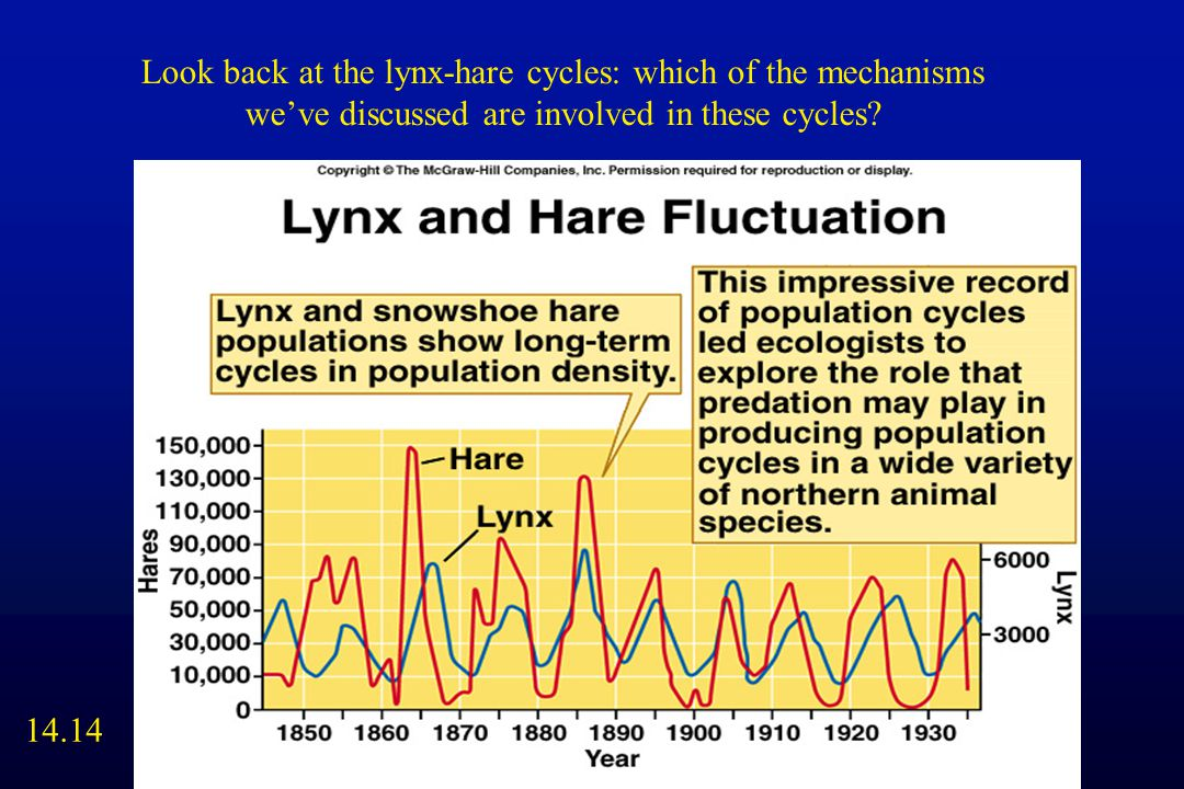 Look back at the lynx-hare cycles: which of the mechanisms we've discussed are involved in these cycles.