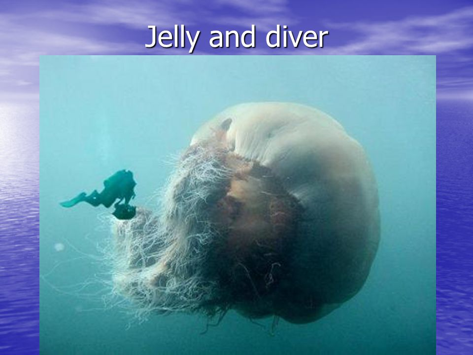 Jelly and diver