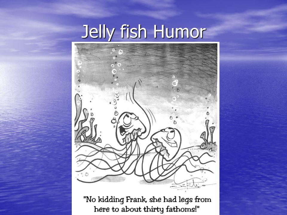 Jelly fish Humor