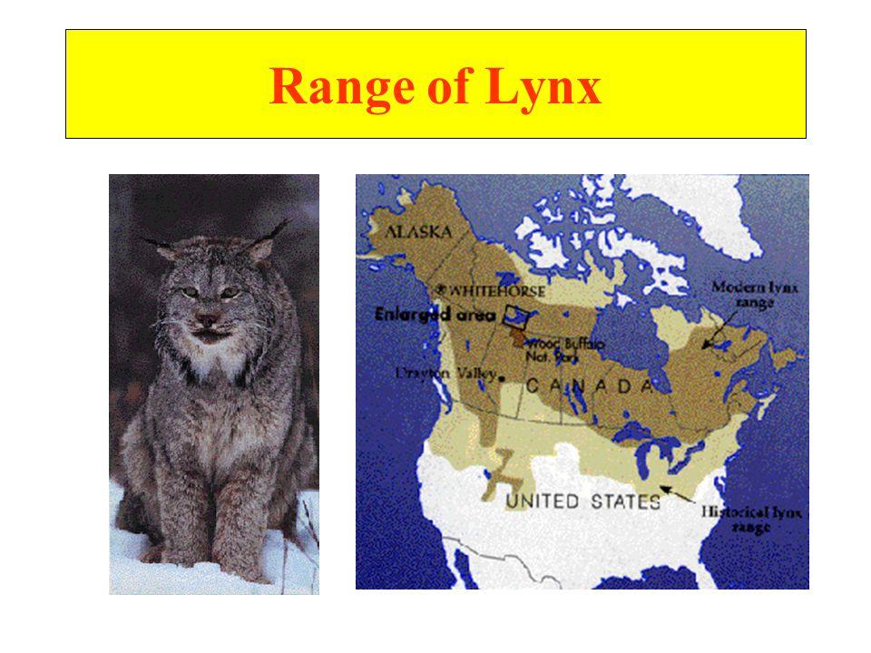 Range of Lynx