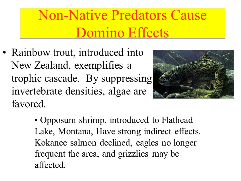 Non-Native Predators Cause Domino Effects Rainbow trout, introduced into New Zealand, exemplifies a trophic cascade.