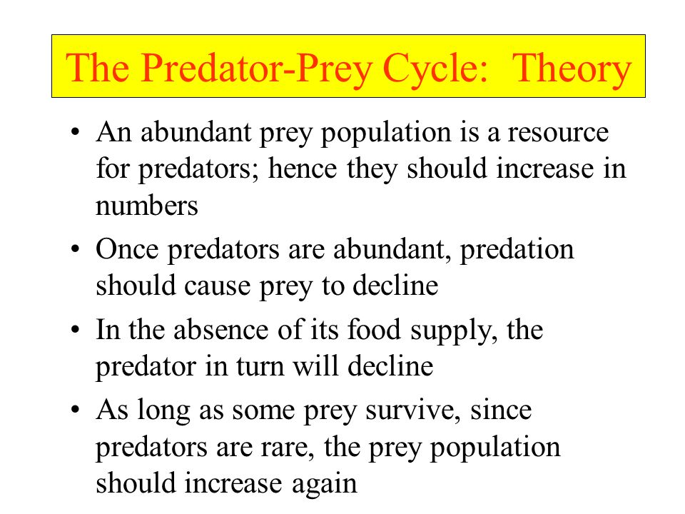An abundant prey population is a resource for predators; hence they should increase in numbers Once predators are abundant, predation should cause prey to decline In the absence of its food supply, the predator in turn will decline As long as some prey survive, since predators are rare, the prey population should increase again The Predator-Prey Cycle: Theory