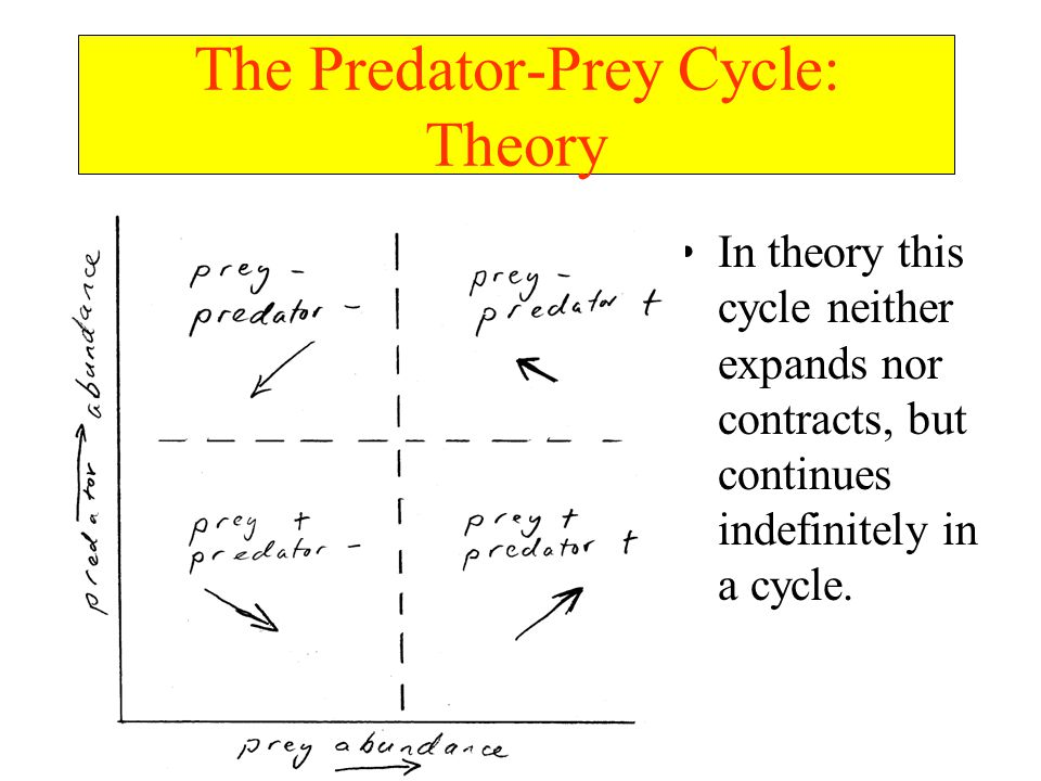 In theory this cycle neither expands nor contracts, but continues indefinitely in a cycle.
